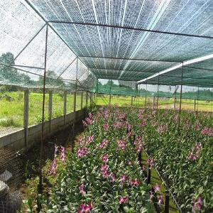 Lưới che giảm nắng Thái lan