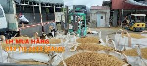 Túi jumbo đã qua sử dụng tải trọng cao trữ lúa 800kg đến 1000 kg