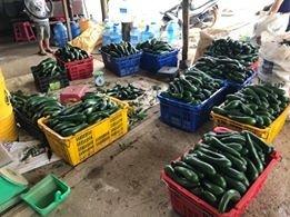 Bơ 034 Lâm Đồng - Vựa bơ sỉ Vườn Nhà Dậu đóng thùng từ 30kg