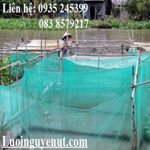 Lưới mùng nuôi ếch Nguyễn Út