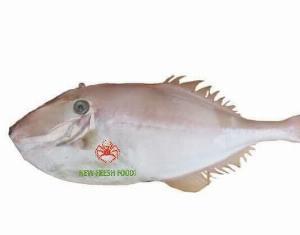 Cá Bò Da - New Fresh Foods