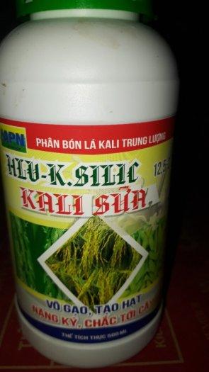 Siêu vô gạo k- silic