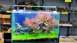 Bể Cá Thủy Sinh Cực Sinh Giá Rẻ