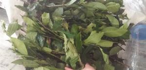 Lá trà xanh, lá chè xanh, lá chè xanh tươi mua tại TPHCM