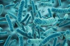Bán men nước Bacillus clausii.