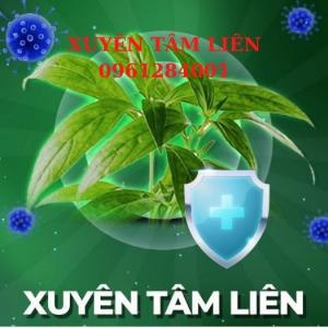 2021-07-24 15:15:56  1  Cây giống xuyên tâm liên, xuyên tâm liên_Vị thuốc tiềm năng trong phòng chống COVID-19 15,000