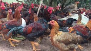 2021-07-24 19:42:16  7  Thịt Gà Vịt Tươi Sống 140,000