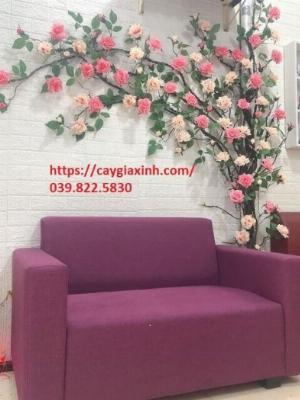 Dây hoa hồng leo  nhựa