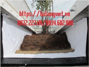 Vải địa trồng cây