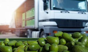 Container dùng bảo quản rau củ quả