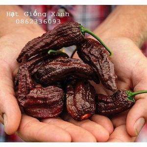 Hạt giống ớt siêu cay Bhut Jolokia màu chocolate - tỷ lệ nảy mầm 80%