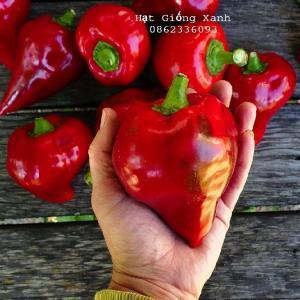 Hạt giống ớt ngọt Lysa - tỷ lệ nảy mầm 80%, nhập khẩu Mỹ f1
