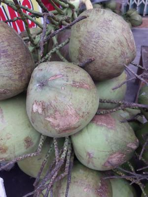 Dừa dứa Bến Tre siêu ngọt