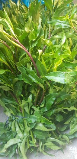 Cung cấp rau rừng gia lai,rau lủi tại tphcm