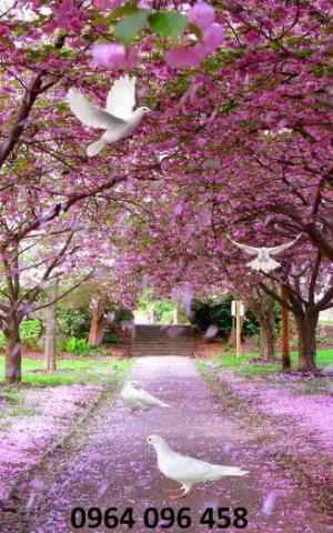 2021-10-23 09:51:56  6  Tranh hoa đào - gạch tranh 3d hoa đào - HDS2 1,200,000