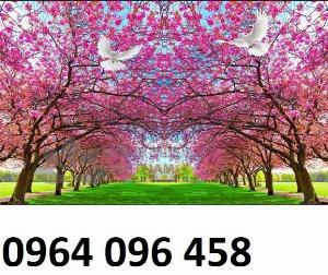 2021-10-23 09:51:56  4  Tranh hoa đào - gạch tranh 3d hoa đào - HDS2 1,200,000