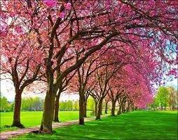 2021-10-23 09:51:56  3  Tranh hoa đào - gạch tranh 3d hoa đào - HDS2 1,200,000