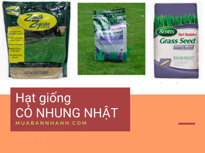 Giá hạt giống cỏ nhung Nhật
