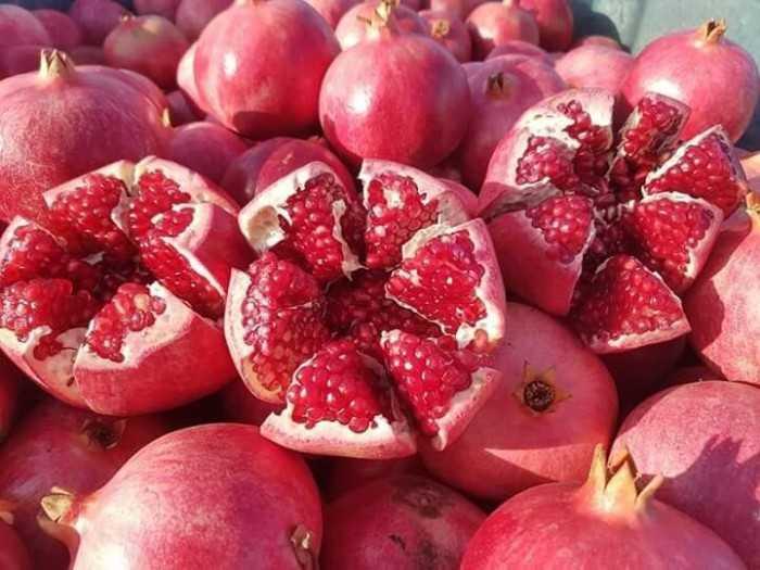 Mua cây giống lựu đỏ lùn tại Hà Nội - Xem so sánh giá cây lựu đỏ lùn từ nhiều người bán uy tín tại Hà Nội trên MXH MuaBanNhanh