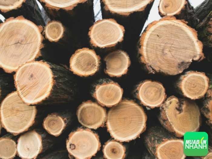 Gỗ tự nhiên và cách phân biệt các loại gỗ