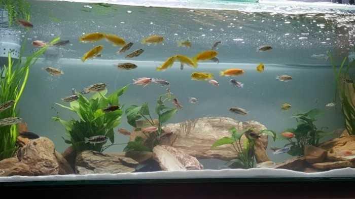 Phân loại bể cá cảnh: bể cá cảnh treo tường, để bàn, bể cá cảnh thủy sinh