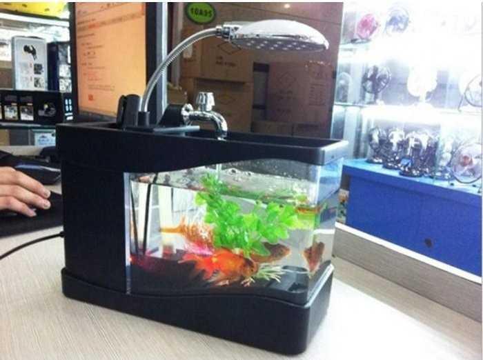 Kiểu dáng thiết kế bể cá cảnh mini, bể cá cảnh lớn
