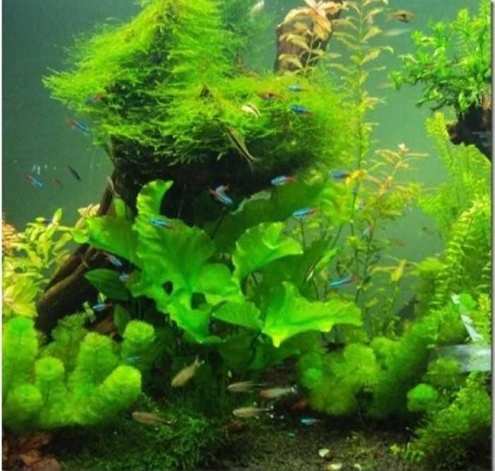 Ý nghĩa bể cá cảnh - nuôi bể cá cảnh đẹp