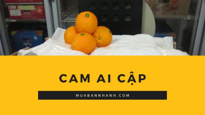 cam Ai Cập