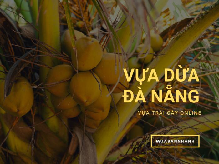 Vựa dừa Đà Nẵng - đại lý dừa Đà Nẵng bán sỉ dừa Xiêm Nhất Tâm, dừa Xiêm lùn, dừa Viconut, dừa sáp trên MuaBanNhanh