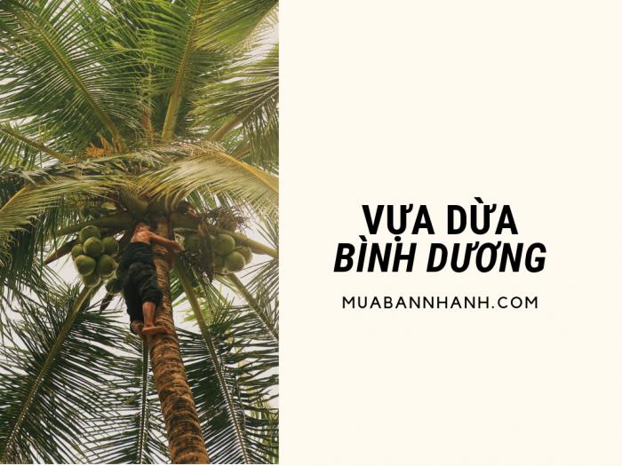 Vựa dừa Bình Dương - thu mua và buôn bán các loại dừa ở khu vực Bình Dương từ Bến Tre, Tiền Giang, Đồng Tháp, Sóc Trăng