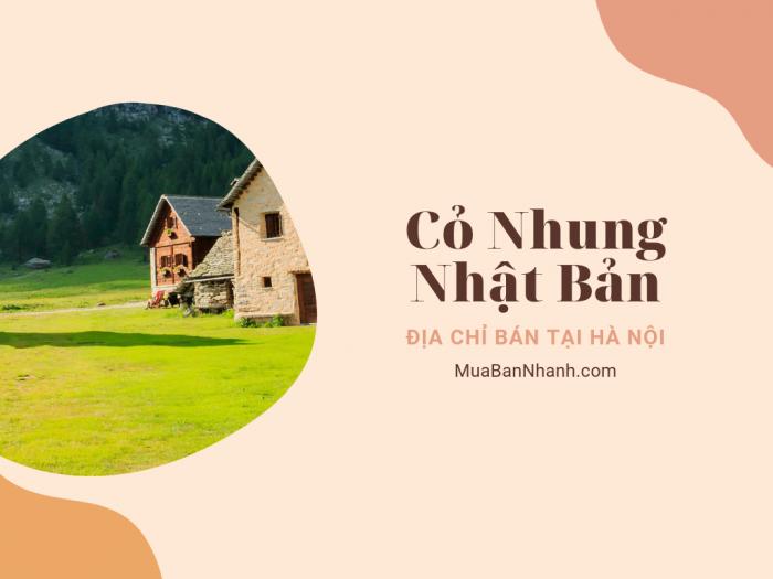 Địa chỉ bán cỏ nhung Nhật ở Hà Nội - giá cỏ nhung Hà Nội trên MuaBanNhanh