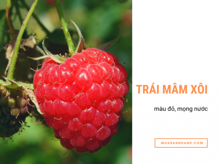 Raspberry - phúc bồn tử - mâm xôi Đà Lạt đạt chuẩn GAP - ngôi vương trái cây có hàm lượng chất chống oxy hóa cao nhất