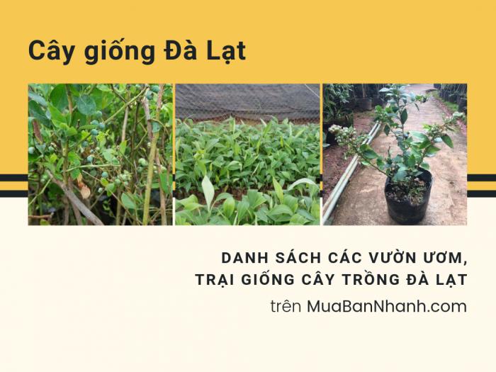 Địa chỉ bán cây giống Đà Lạt - Danh sách các vườn ươm, trại giống cây trồng Đà Lạt