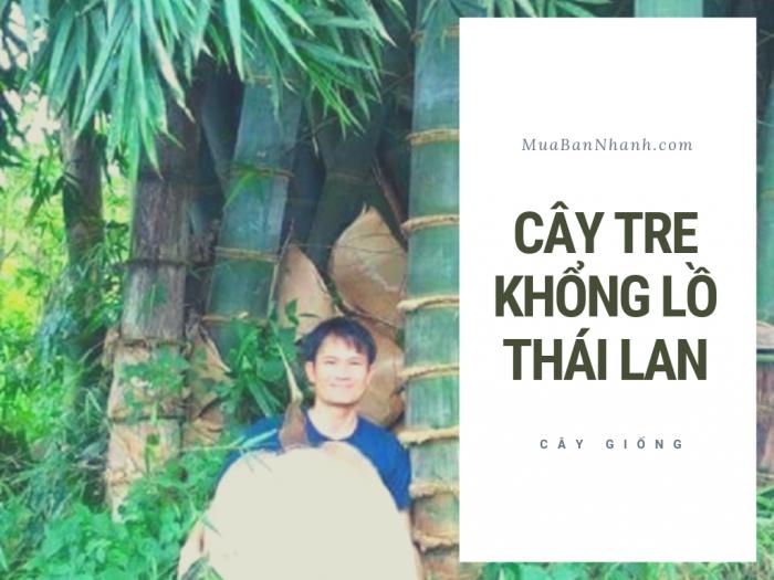 Bán giống tre khổng lồ Thái Lan - Mua giống cây tre khổng lồ từ trung tâm giống cây trồng trên MuaBanNhanh