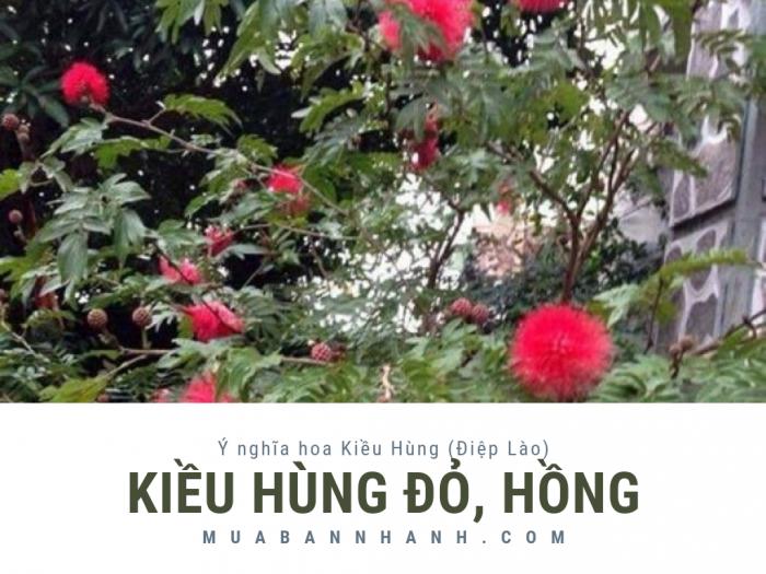 Mua bán cây Kiều Hùng đỏ, hồng - Ý nghĩa hoa Kiều Hùng (Điệp Lào)