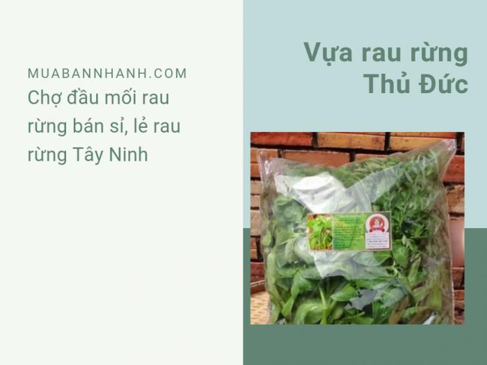 Vựa rau rừng Thủ Đức - Chợ đầu mối rau rừng bán sỉ, lẻ rau rừng Tây Ninh
