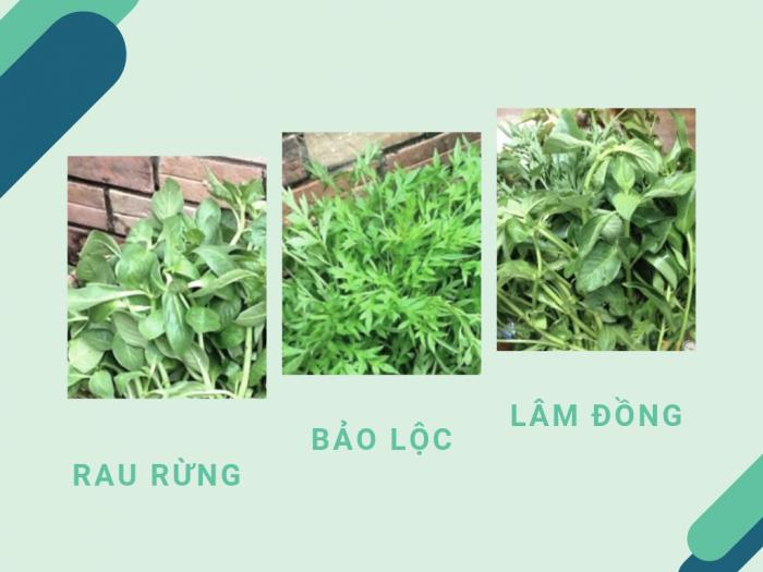 Làm giàu từ sản xuất rau rừng Bảo Lộc, Lâm Đồng: bầu đất, lỗ bình và cần dại