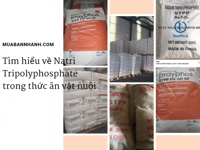 Tìm hiểu về Natri Tripolyphosphate trong thức ăn vật nuôi