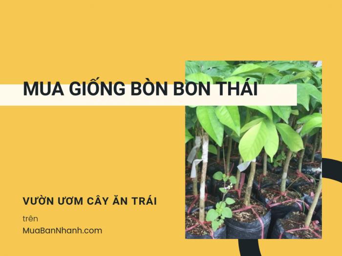 Mua giống bòn bon Thái ở đâu? Giá cây giống bòn bon từ vườn ươm tại MuaBanNhanh