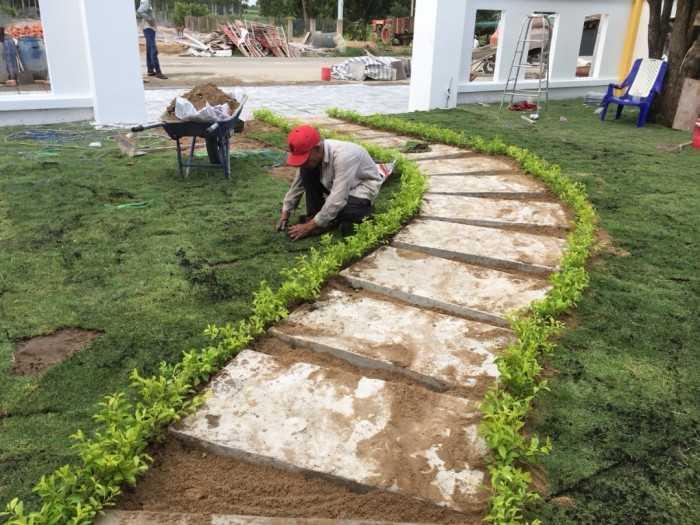 Cách trồng cỏ nhung bằng hạt cho thảm cỏ đẹp, xanh mướt