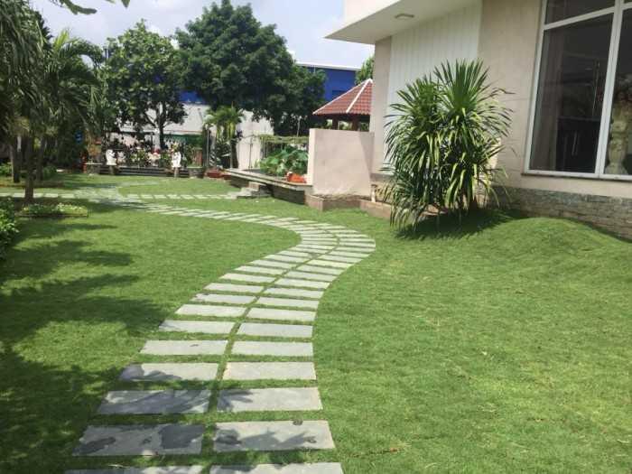 Tại sao phải mua cỏ nhung Nhật trên MuaBanNhanh