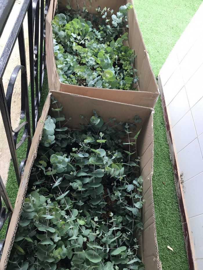 Cách đóng gói cây giống để vận chuyển - MuaBanNhanh