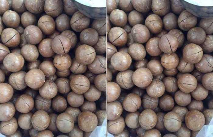 Hình hạt macca