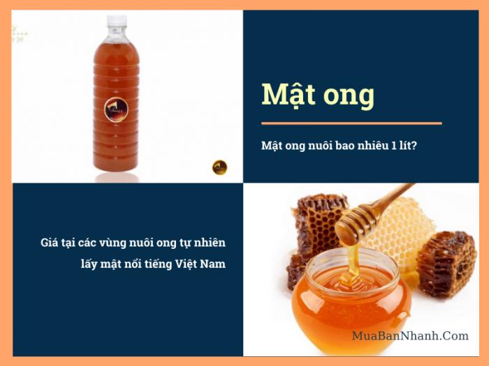 Mật ong nuôi bao nhiêu 1 lít? Giá tại các vùng nuôi ong tự nhiên lấy mật nổi tiếng Việt Nam