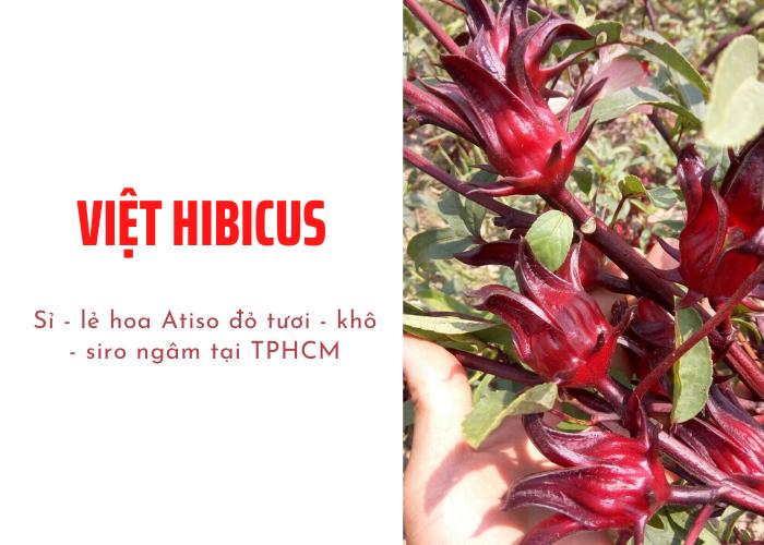 việt hibicus