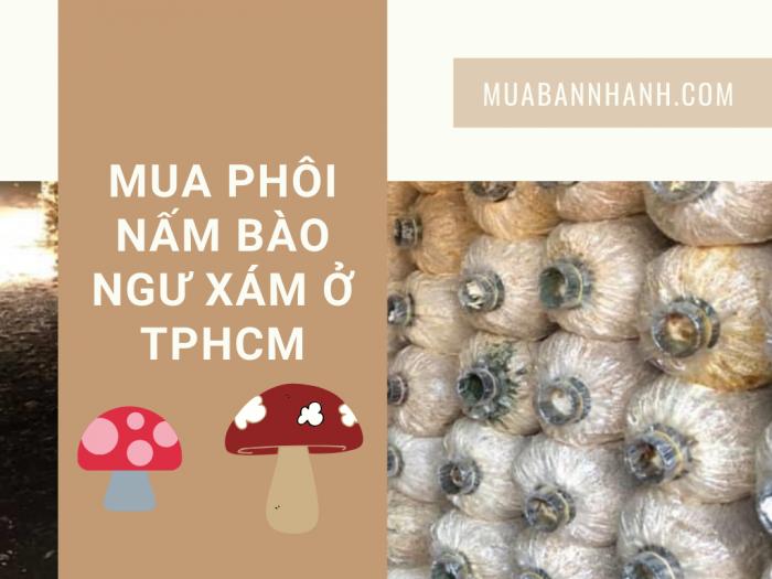 Mua phôi nấm bào ngư xám ở TPHCM, giao đầu tuần từ đối tác MuaBanNhanh