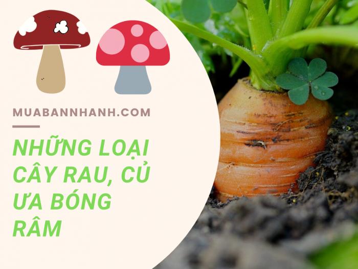 Những loại cây rau ưa bóng râm, dễ trồng như rau ăn củ, rau ăn lá, thảo mộc và nấm