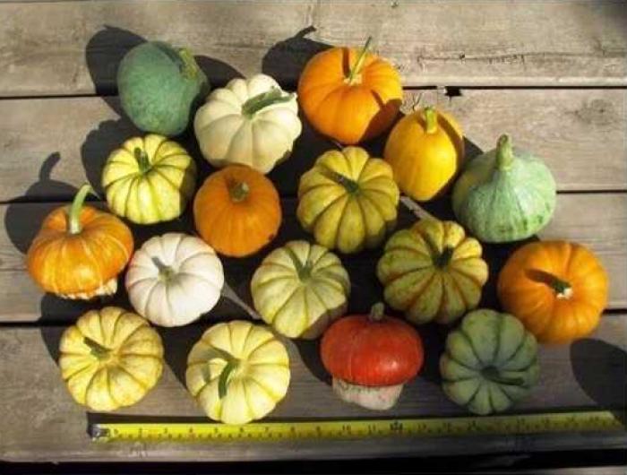 Lịch trồng rau theo tháng trên MuaBanNhanh