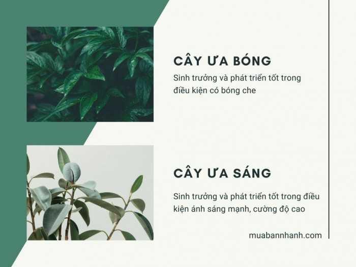 Tìm hiểu cây ưa bóng và cây ưa sáng, đặc điểm so sánh, phân biệt các giống cây rau, cây ăn trái, cây cảnh, cây hoa