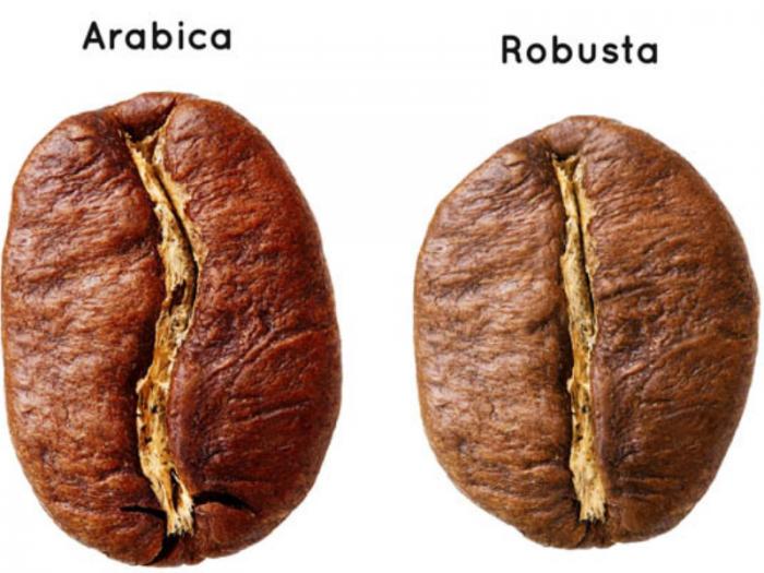 vị hạt cà phê